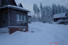 Arnika v zimě